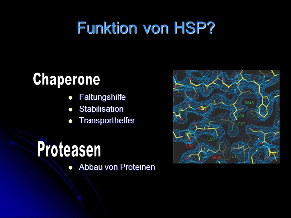 Funktion von HSP Chaperone Proteasen Faltungshilfe Stabilisation