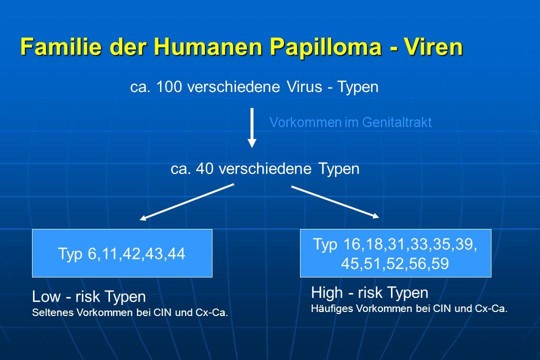 Familie der Humanen Papilloma - Viren