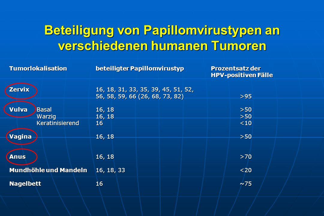 Beteiligung von Papillomvirustypen an verschiedenen humanen Tumoren