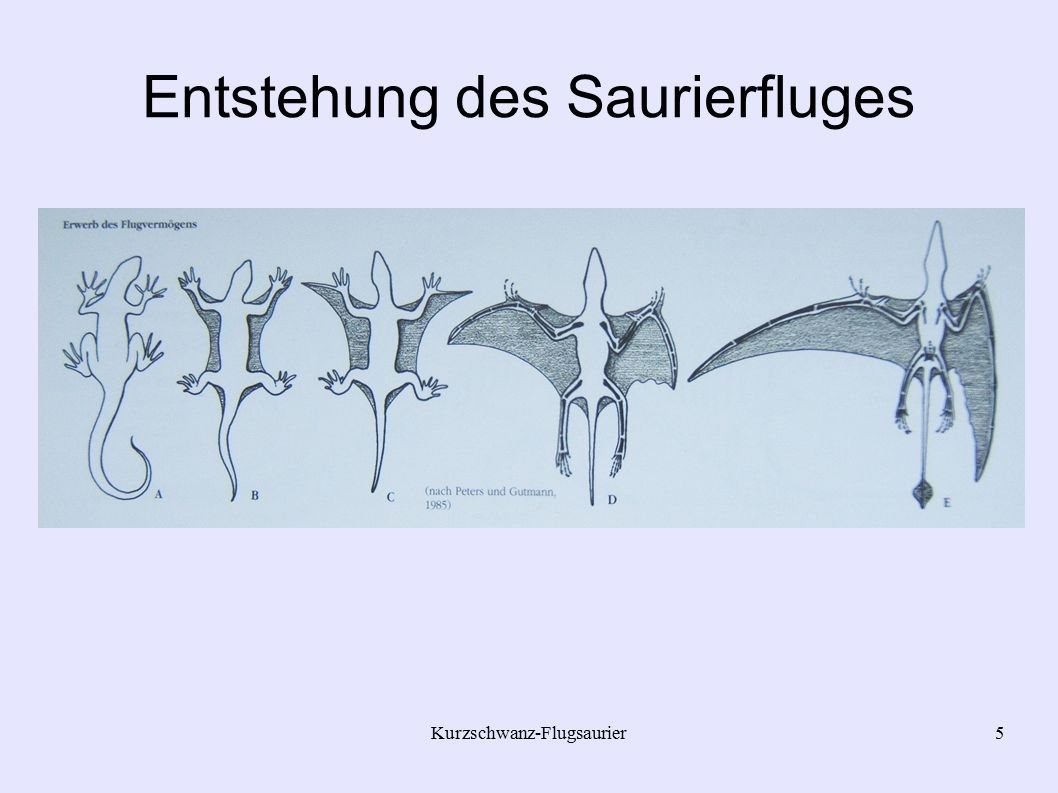 Entstehung des Saurierfluges