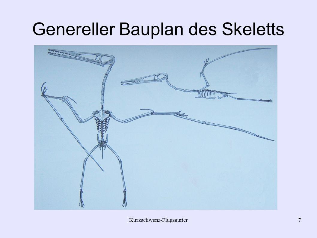 Genereller Bauplan des Skeletts