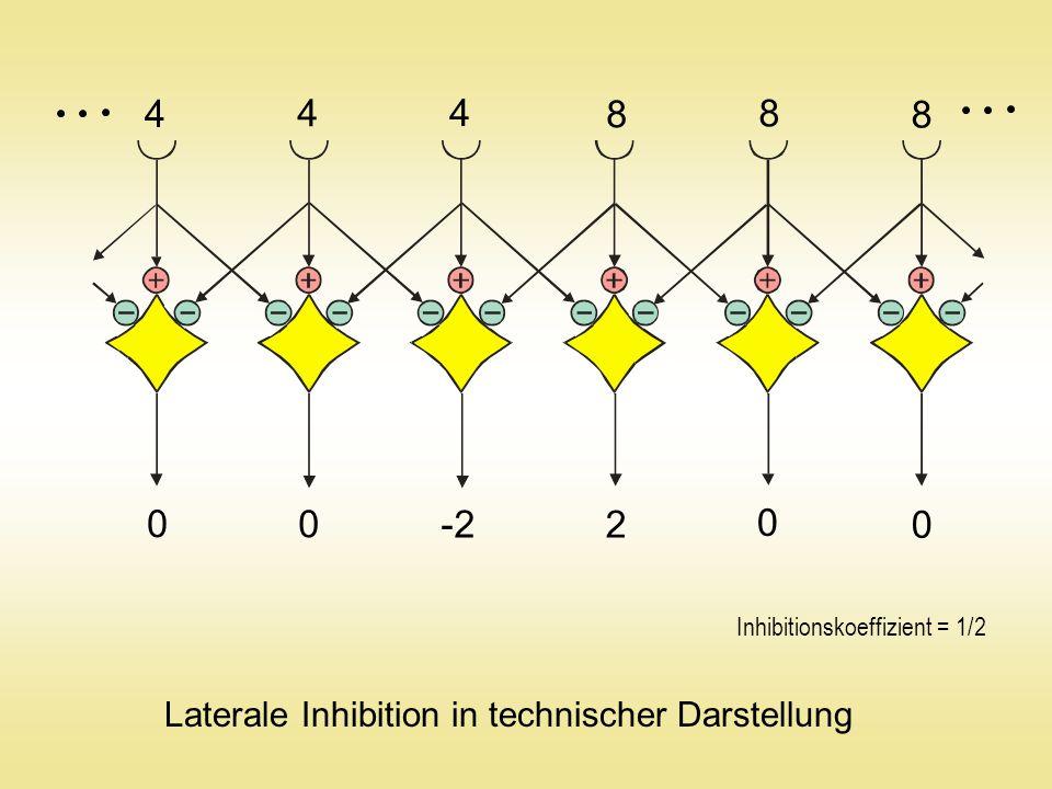 4 8 -2 2 Laterale Inhibition in technischer Darstellung