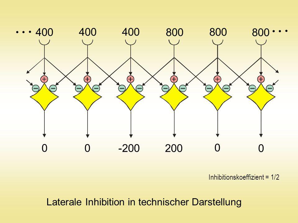 400 800 -200 200 Laterale Inhibition in technischer Darstellung