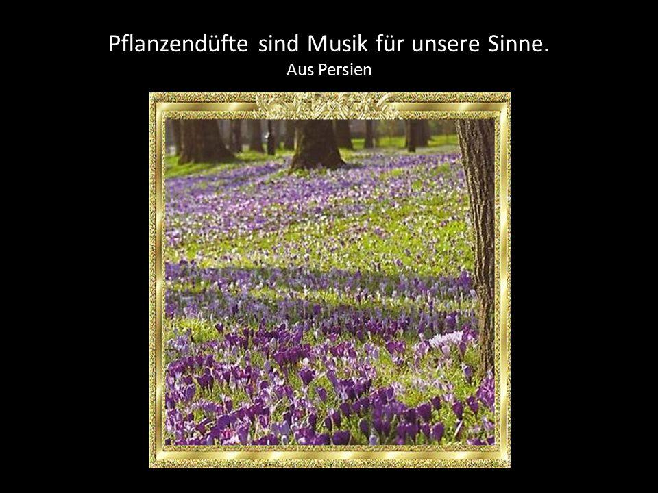Pflanzendüfte sind Musik für unsere Sinne.