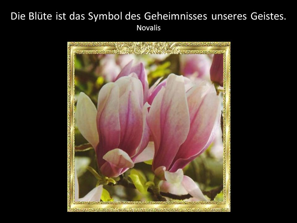 Die Blüte ist das Symbol des Geheimnisses unseres Geistes.