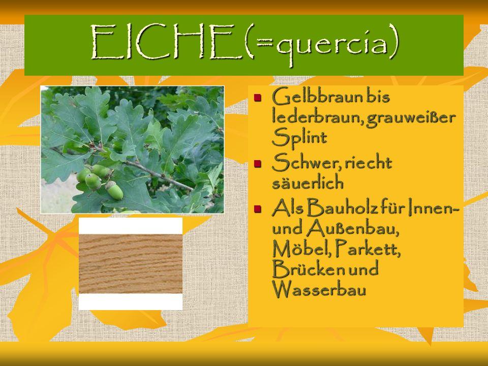 EICHE(=quercia) Gelbbraun bis lederbraun, grauweißer Splint