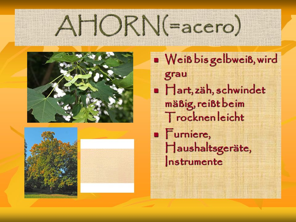 AHORN(=acero) Weiß bis gelbweiß, wird grau