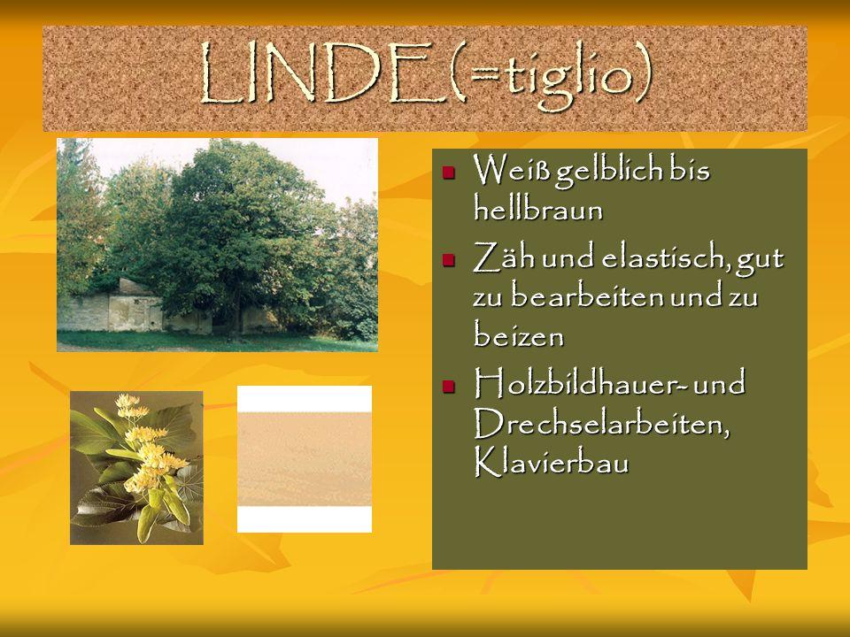 LINDE(=tiglio) Weiß gelblich bis hellbraun
