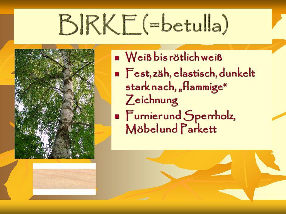 BIRKE(=betulla) Weiß bis rötlich weiß