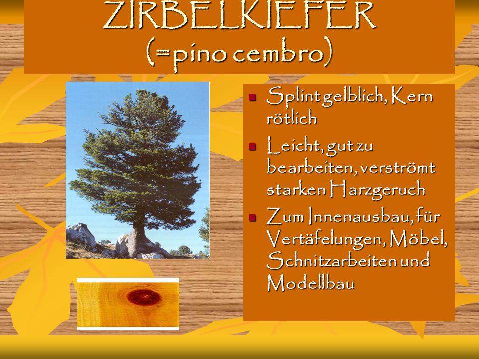 ZIRBELKIEFER (=pino cembro)