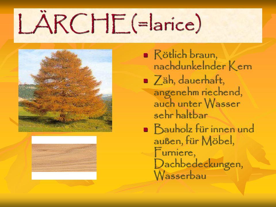 LÄRCHE(=larice) Rötlich braun, nachdunkelnder Kern