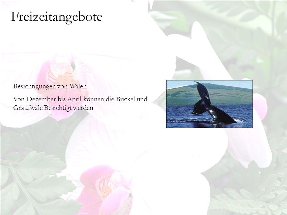 Freizeitangebote Besichtigungen von Walen
