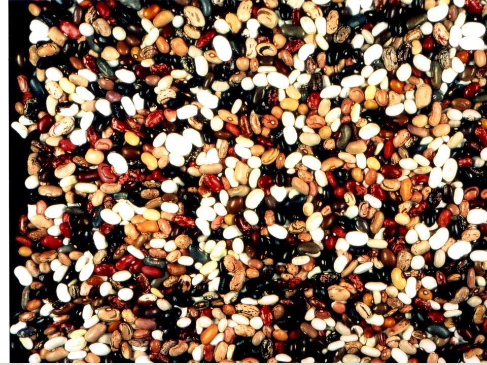 Kulturpflanzenvielfalt