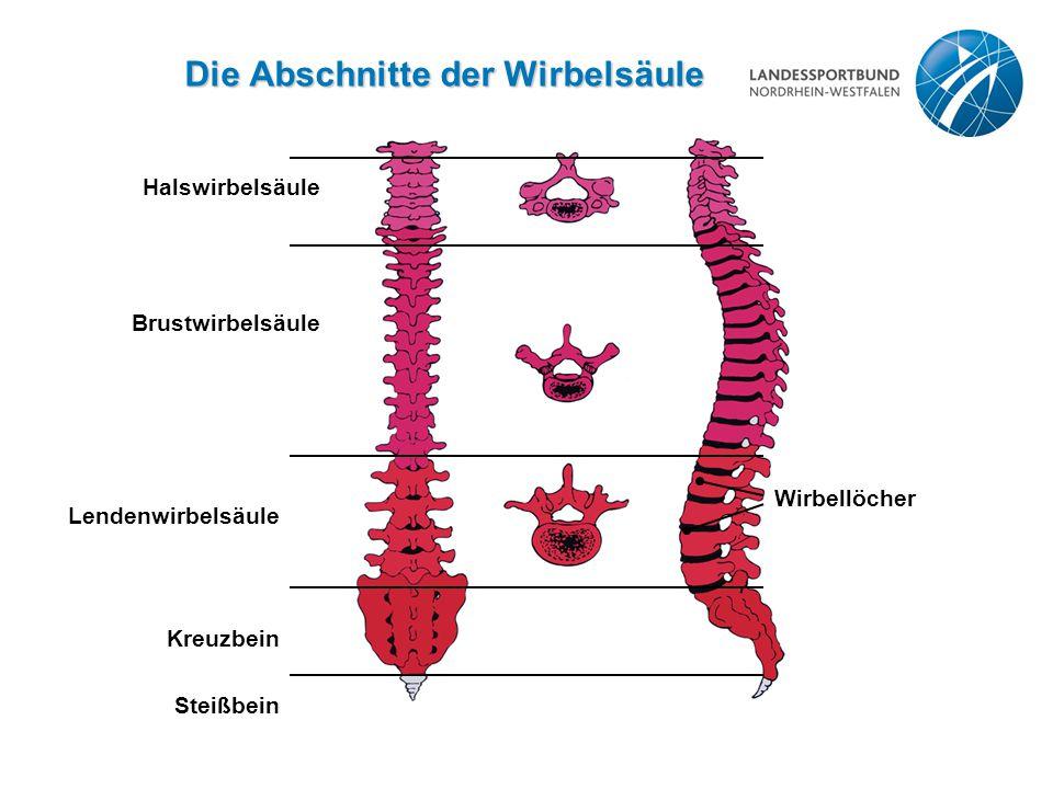 Die Abschnitte der Wirbelsäule