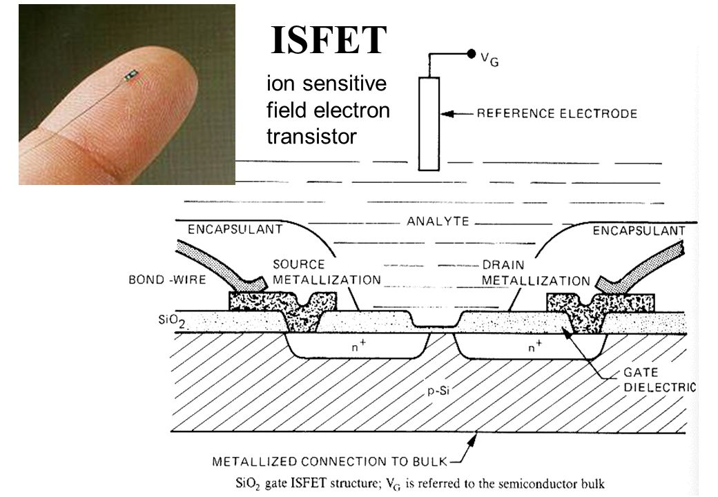 ISFET ion sensitive field electron transistor