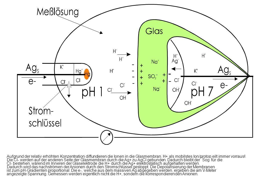 Aufgrund der relativ erhöhten Konzentration diffundieren die Ionen in die Glasmembran. H