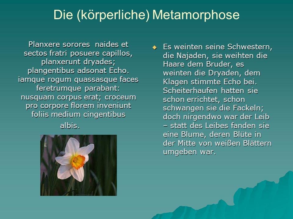 Die (körperliche) Metamorphose