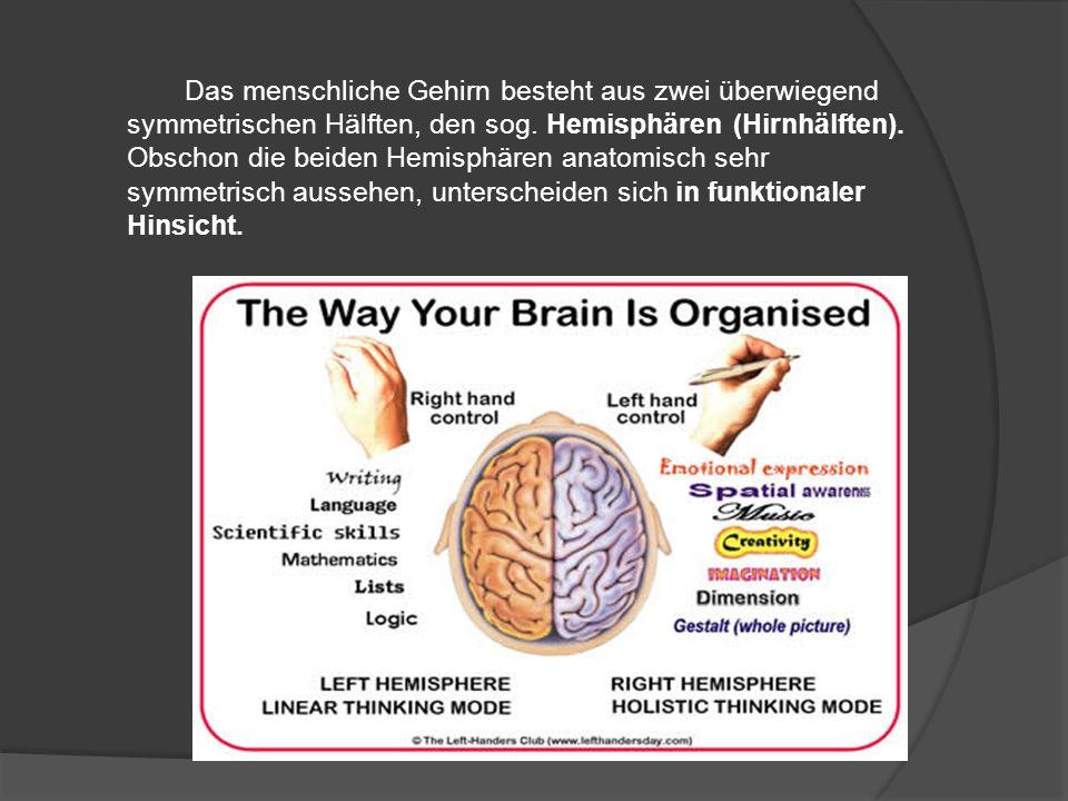 Das menschliche Gehirn besteht aus zwei überwiegend symmetrischen Hälften, den sog.