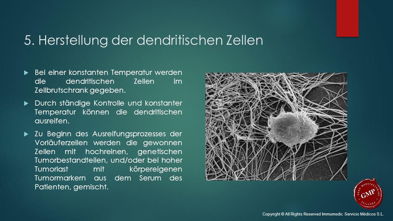 5. Herstellung der dendritischen Zellen