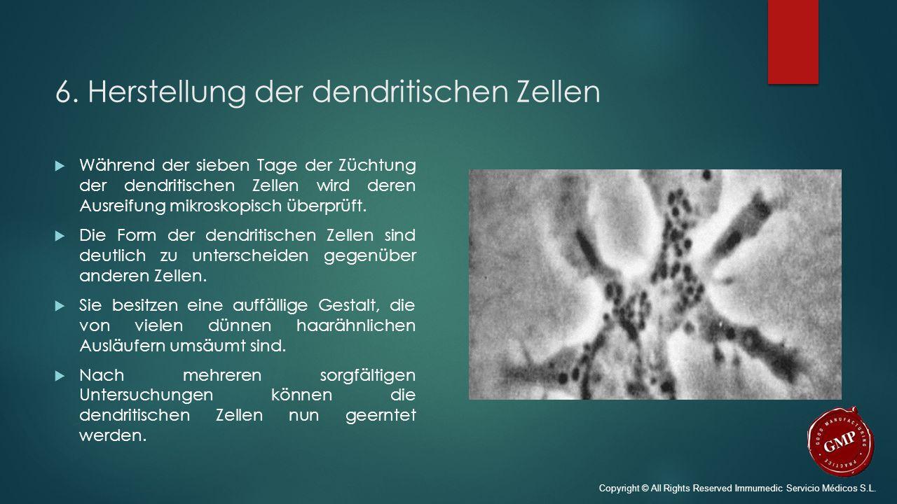 6. Herstellung der dendritischen Zellen