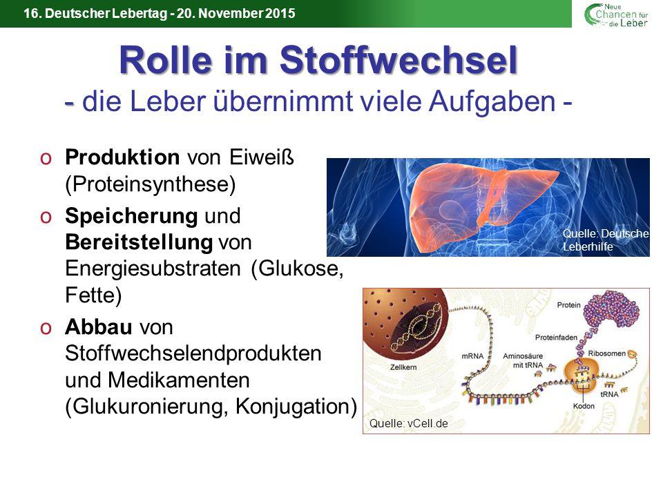 Rolle im Stoffwechsel - die Leber übernimmt viele Aufgaben -