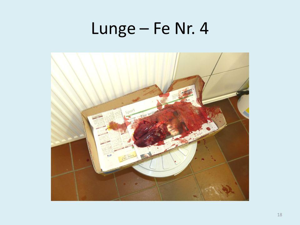 Lunge – Fe Nr. 4