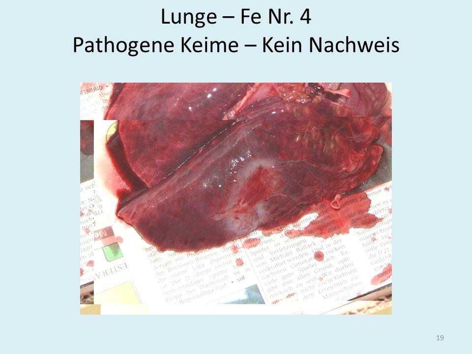 Lunge – Fe Nr. 4 Pathogene Keime – Kein Nachweis