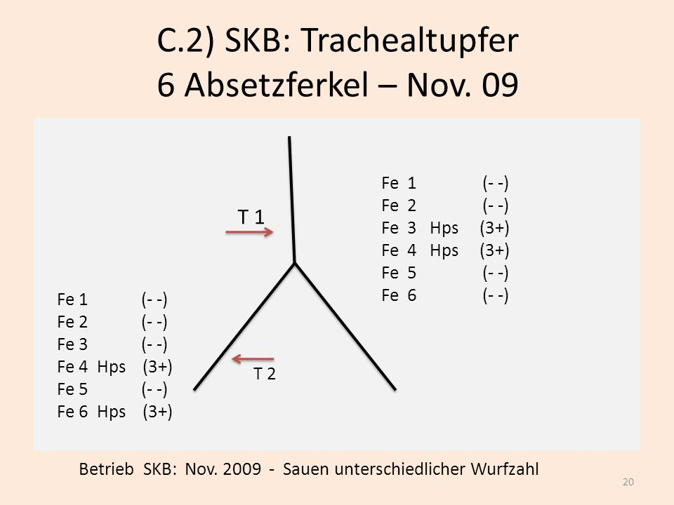 C.2) SKB: Trachealtupfer 6 Absetzferkel – Nov. 09