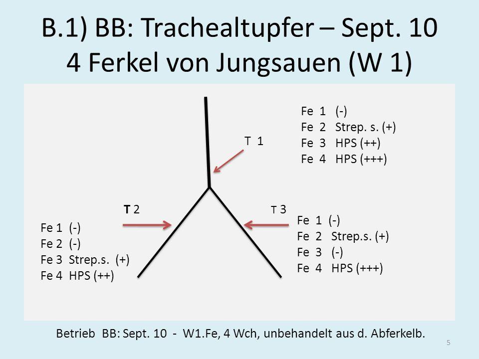 B.1) BB: Trachealtupfer – Sept. 10 4 Ferkel von Jungsauen (W 1)