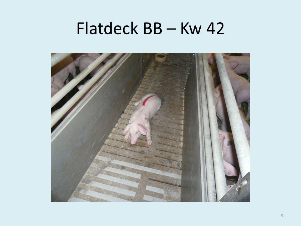 Flatdeck BB – Kw 42