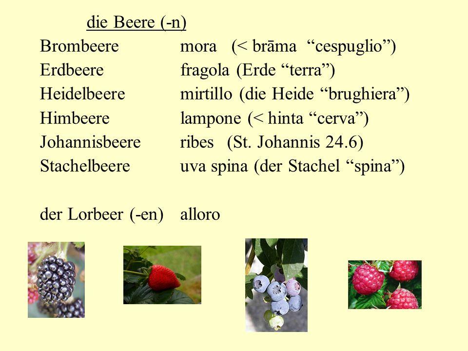 die Beere (-n) Brombeere mora (< brāma cespuglio ) Erdbeere fragola (Erde terra ) Heidelbeere mirtillo (die Heide brughiera )