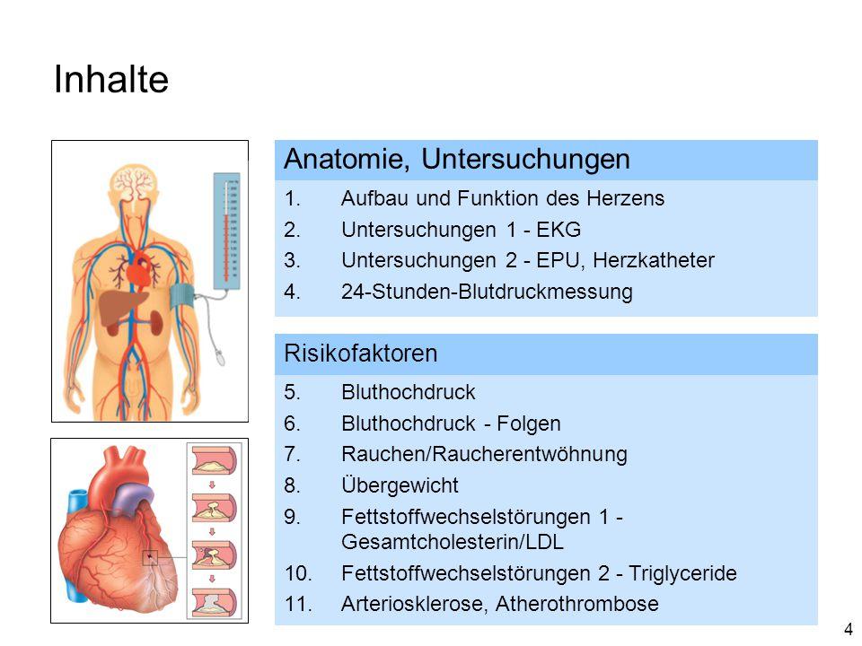 Inhalte Anatomie, Untersuchungen Risikofaktoren