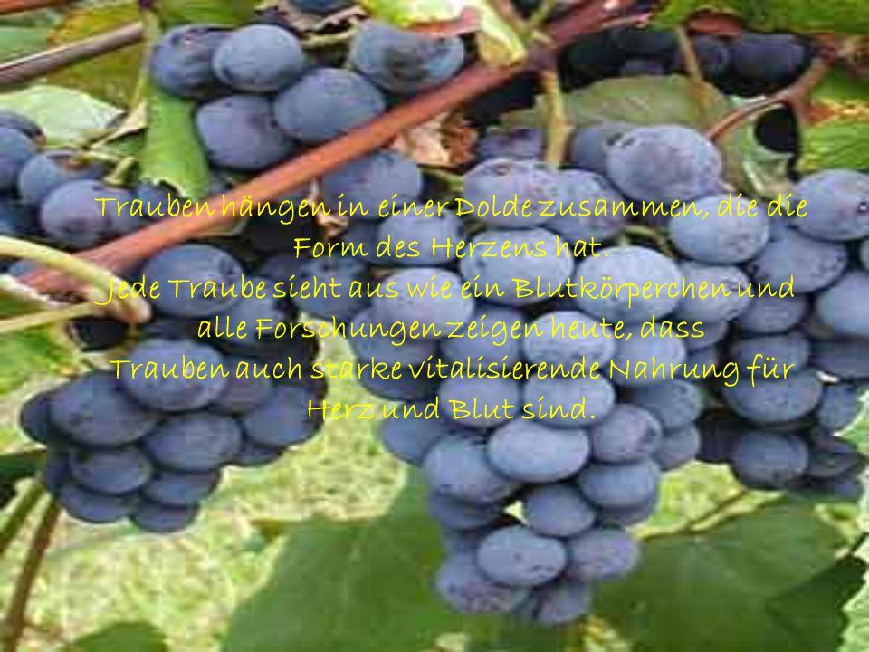 Trauben hängen in einer Dolde zusammen, die die Form des Herzens hat