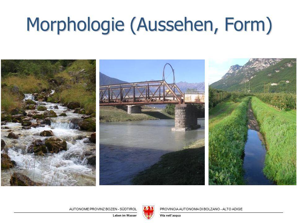 Morphologie (Aussehen, Form)