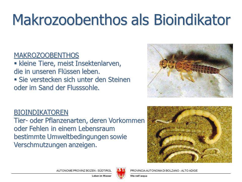 Makrozoobenthos als Bioindikator