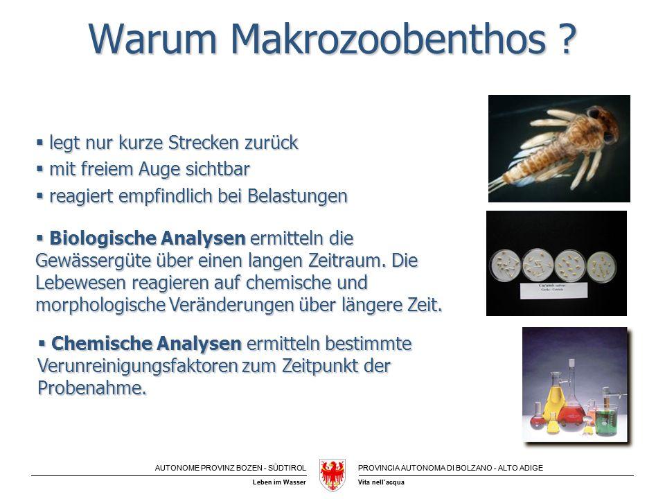 Warum Makrozoobenthos
