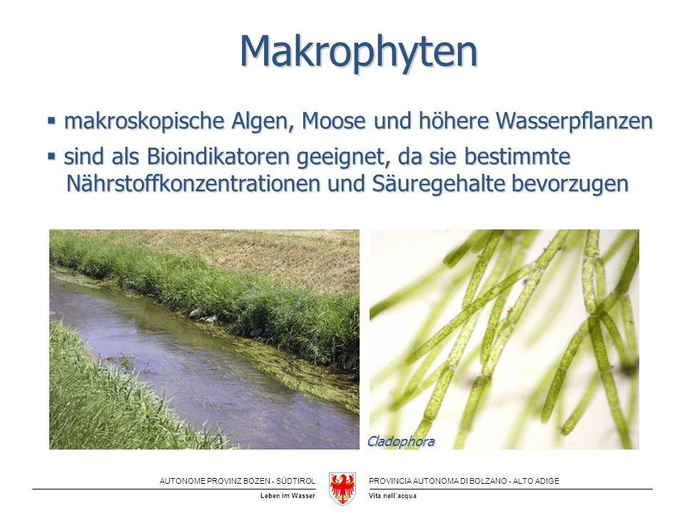 Makrophyten makroskopische Algen, Moose und höhere Wasserpflanzen
