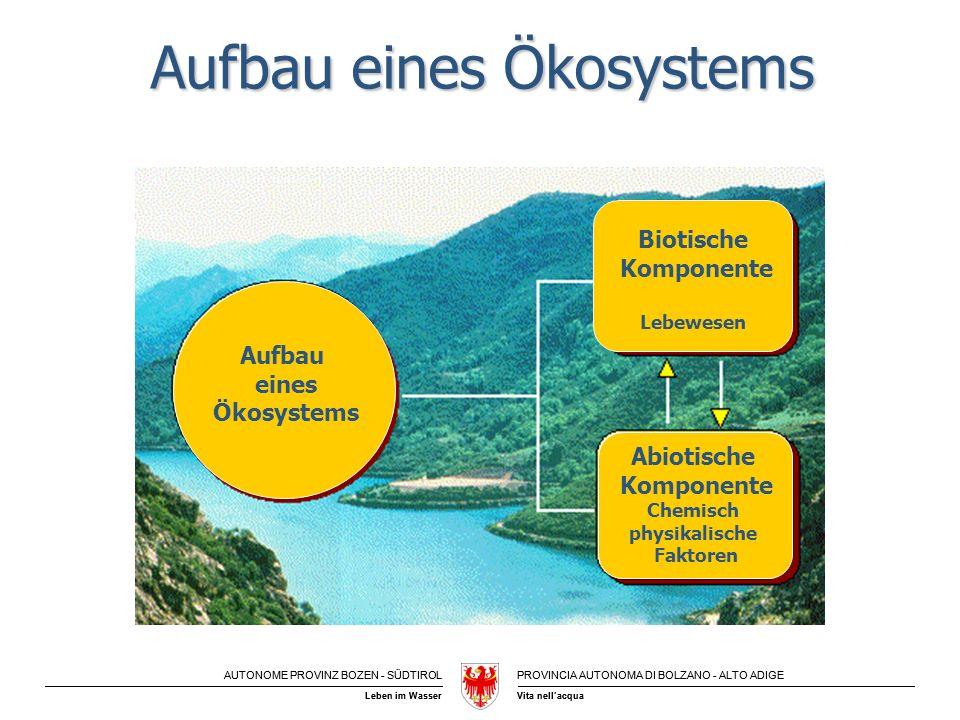 Aufbau eines Ökosystems