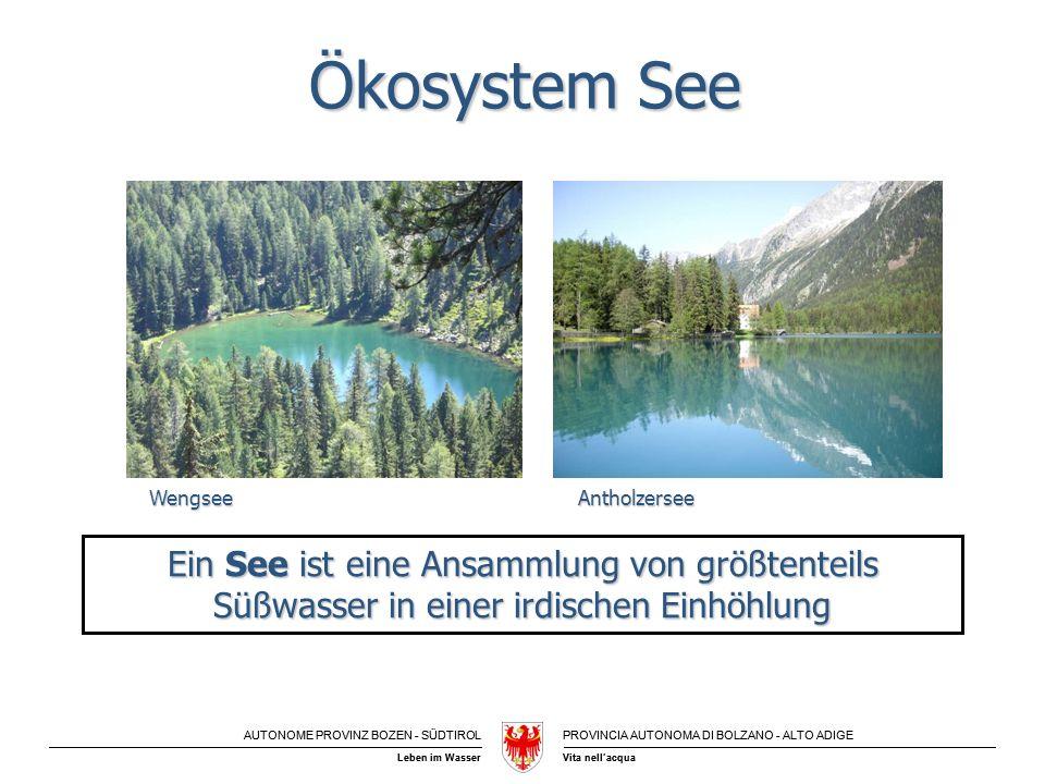 Ökosystem See Wengsee. Antholzersee. Ein See ist eine Ansammlung von größtenteils Süßwasser in einer irdischen Einhöhlung.