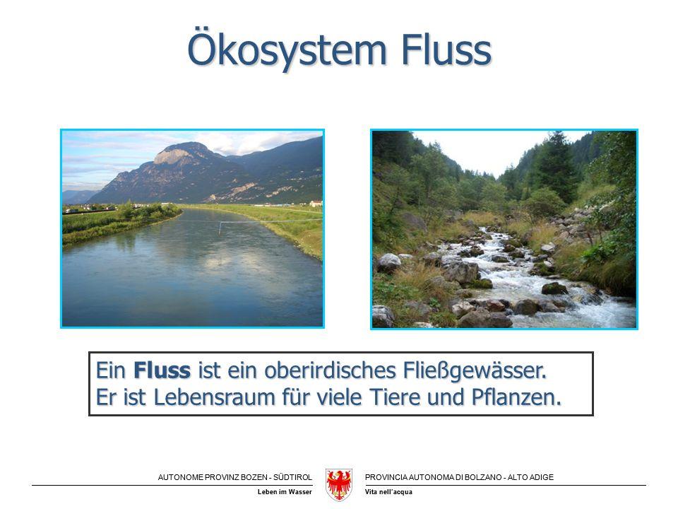 Ökosystem Fluss Ein Fluss ist ein oberirdisches Fließgewässer.