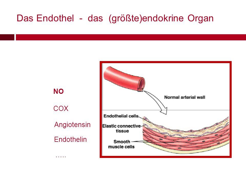 Das Endothel - das (größte)endokrine Organ