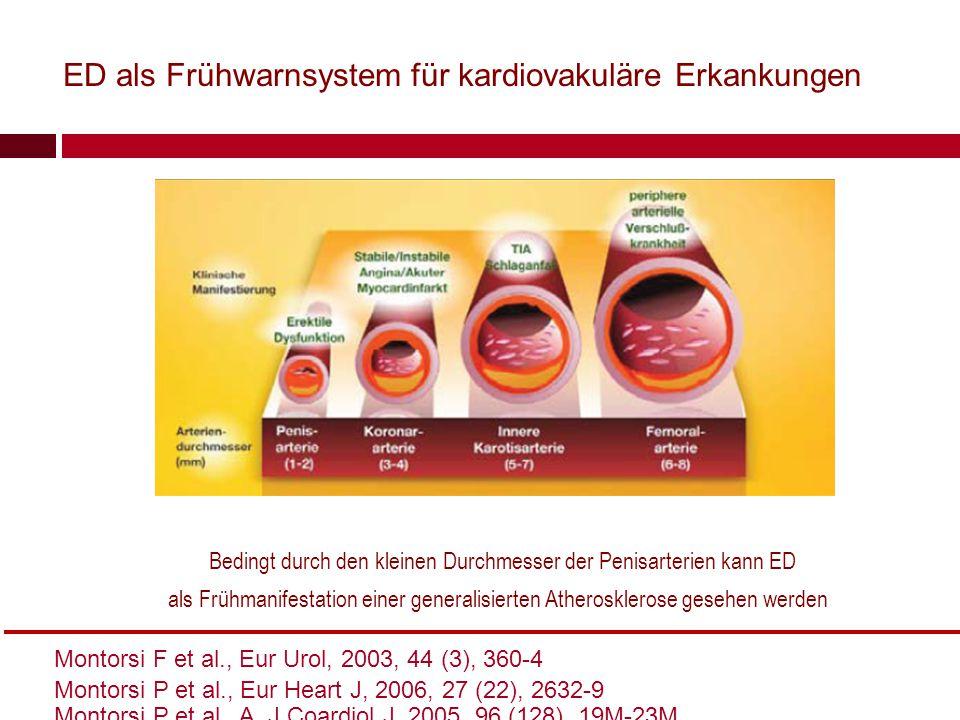 Bedingt durch den kleinen Durchmesser der Penisarterien kann ED