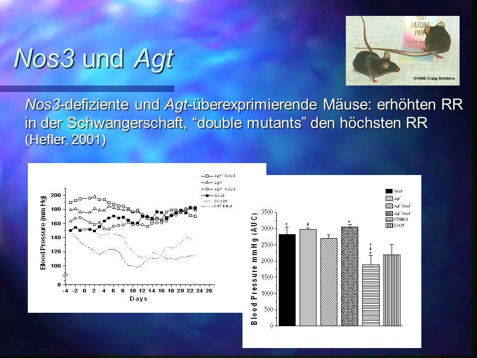 Nos3 und Agt Nos3-defiziente und Agt-überexprimierende Mäuse: erhöhten RR. in der Schwangerschaft, double mutants den höchsten RR.