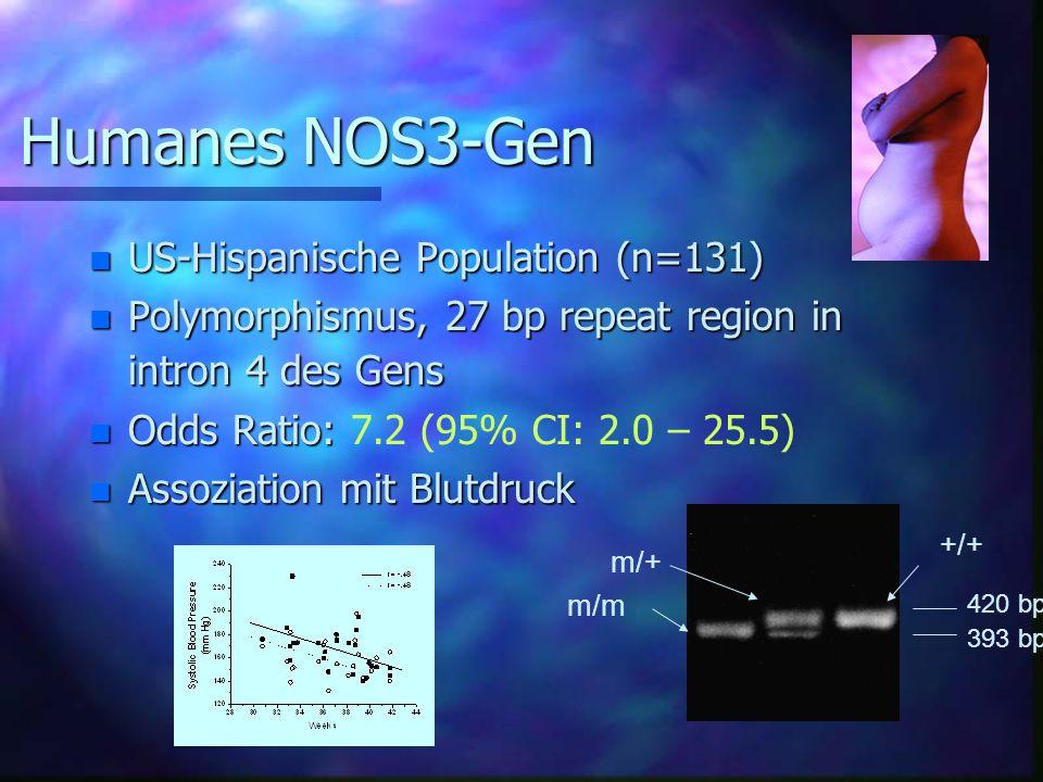 Humanes NOS3-Gen US-Hispanische Population (n=131)
