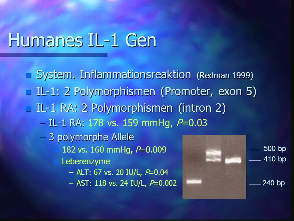 Humanes IL-1 Gen System. Inflammationsreaktion (Redman 1999)