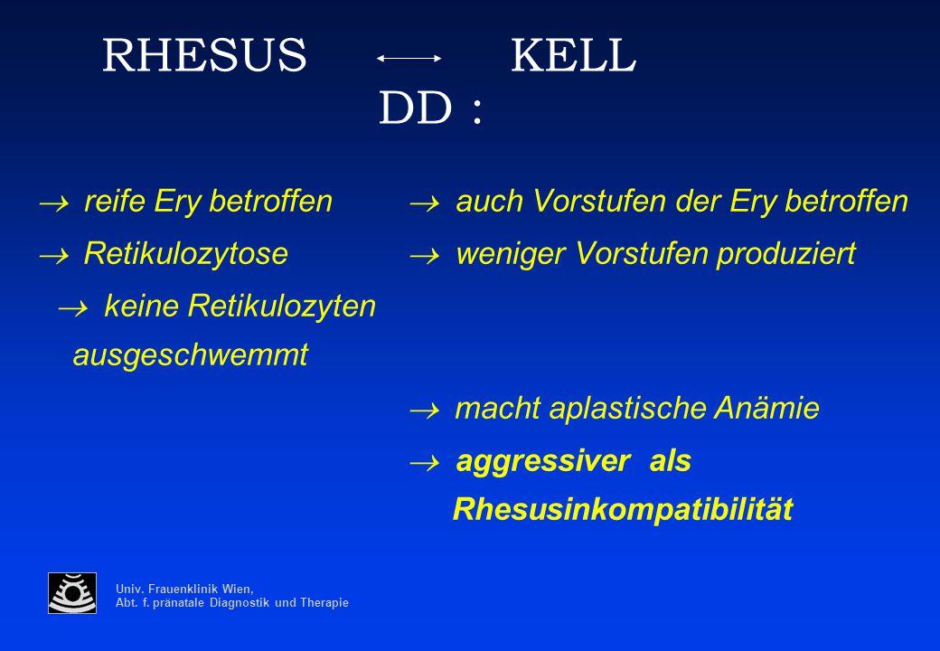 RHESUS KELL DD : ® Retikulozytose ® weniger Vorstufen produziert