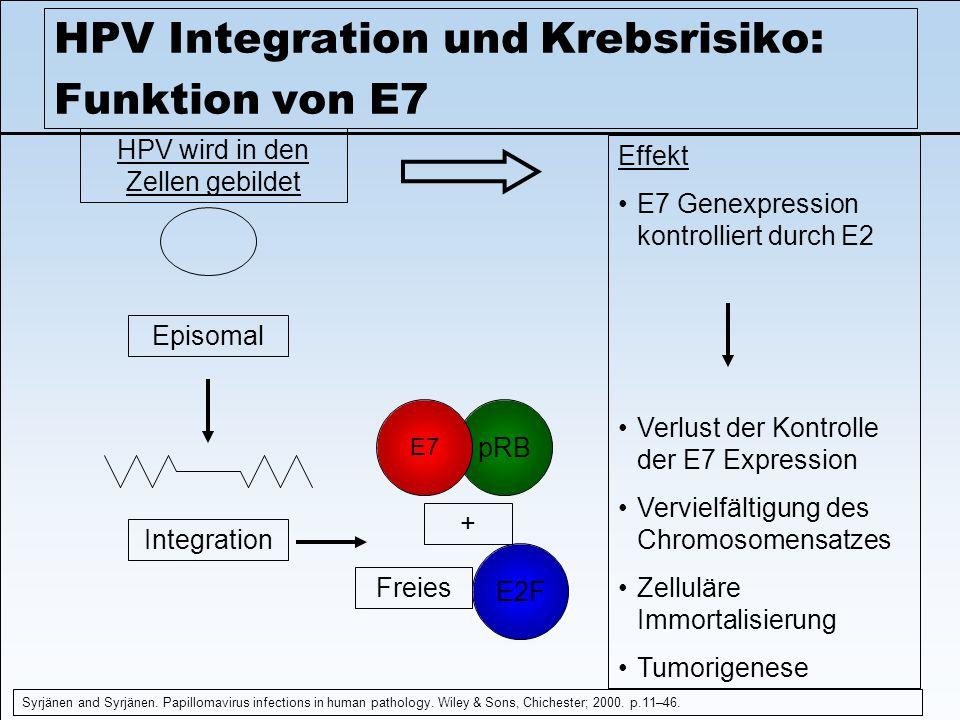 HPV Integration und Krebsrisiko: Funktion von E7