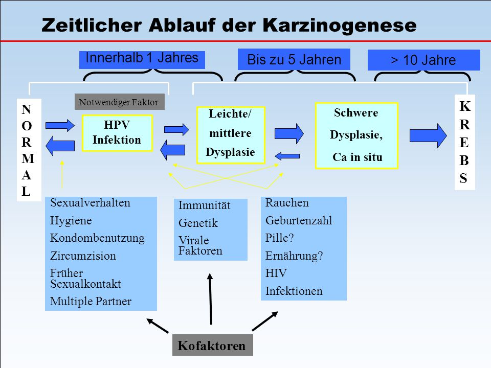 Zeitlicher Ablauf der Karzinogenese