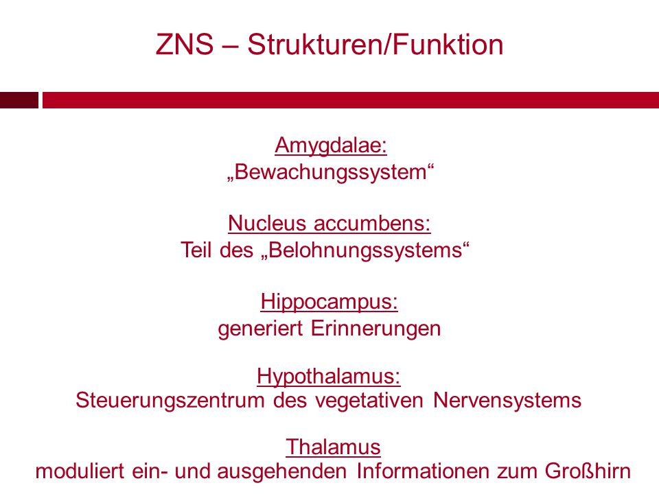 ZNS – Strukturen/Funktion