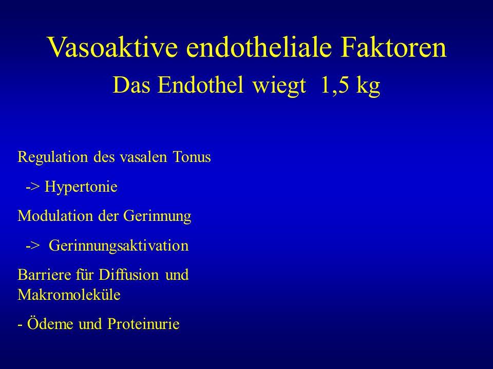 Vasoaktive endotheliale Faktoren Das Endothel wiegt 1,5 kg
